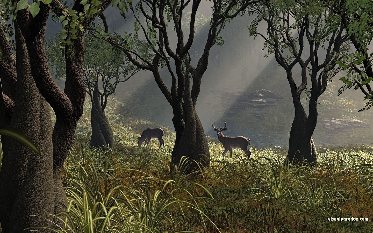 deer, crooked, forest, woods, glen, sun, rays, grass, trees, lake, buck, doe, 3d, wallpaper, widescreen