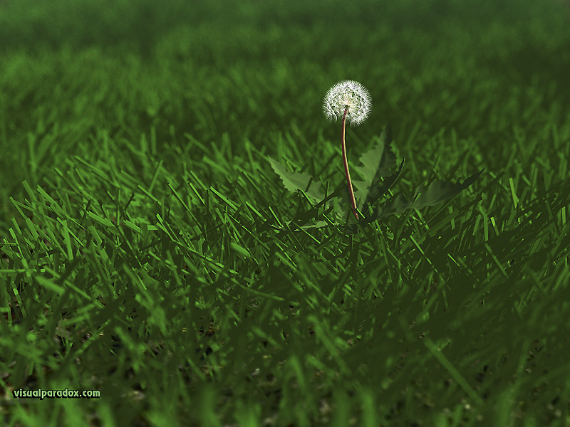 weed, flower, grass, lawn, yard, dandylion, seeds, plants, green, 3d