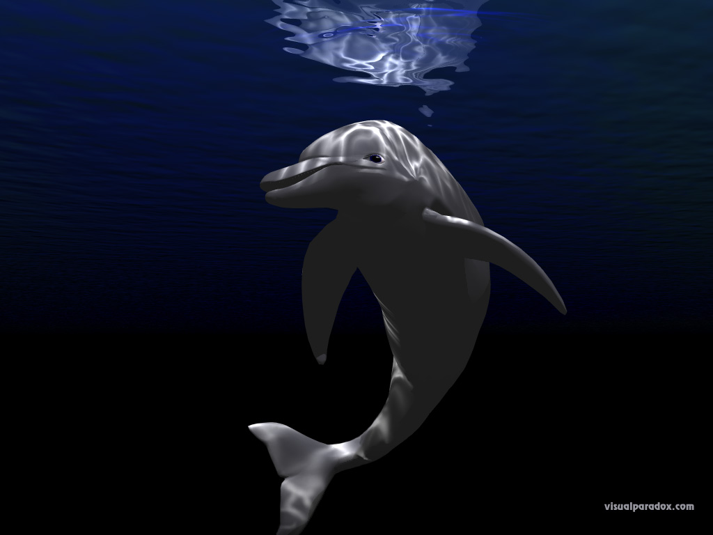 porpoise, underwater, blue, ocean, light, happy, joy, swim, dolphins, animal, animals, 3d, wallpaper