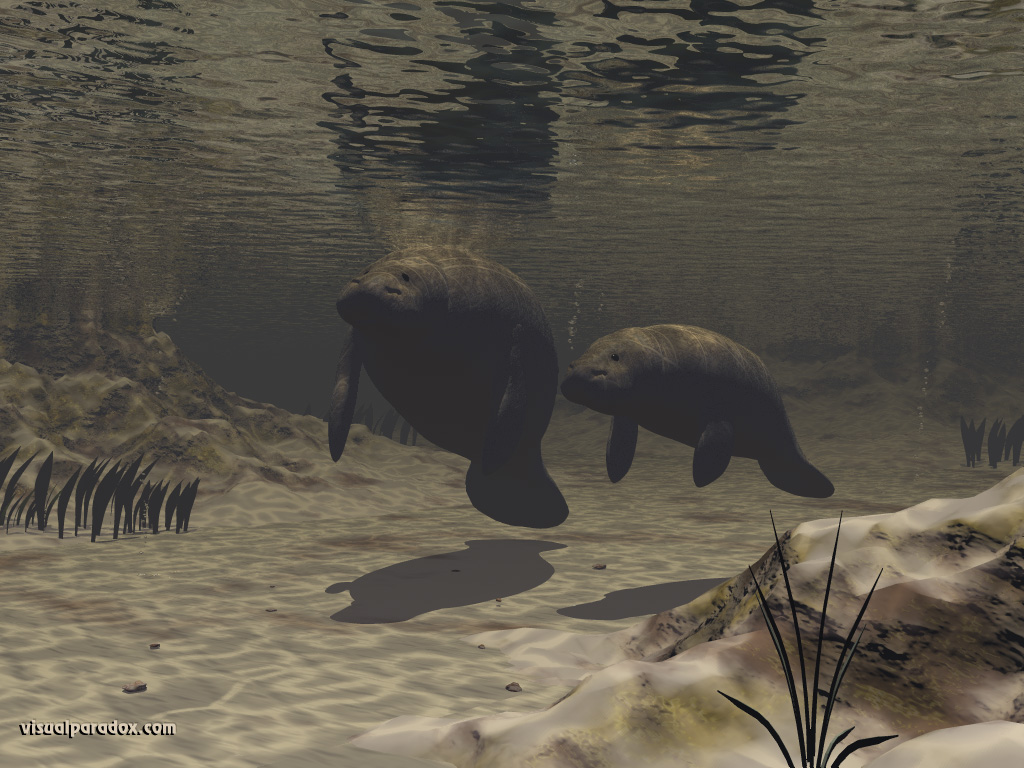 manatees, sea cows, underwater, mother, baby, tranquil, manatee, animal, animals, water, 3d, wallpaper