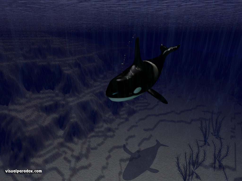 killer, whale, alone, ocean, water, sea, shallows, continental shelf, orcas, whales, animal, underwater, animals, 3d, wallpaper