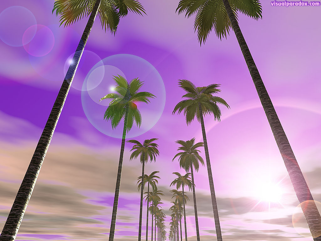 palm tree, sky, clouds, purple, flare, sun, bright, sunset, sunrise, trees, 3d, wallpaper