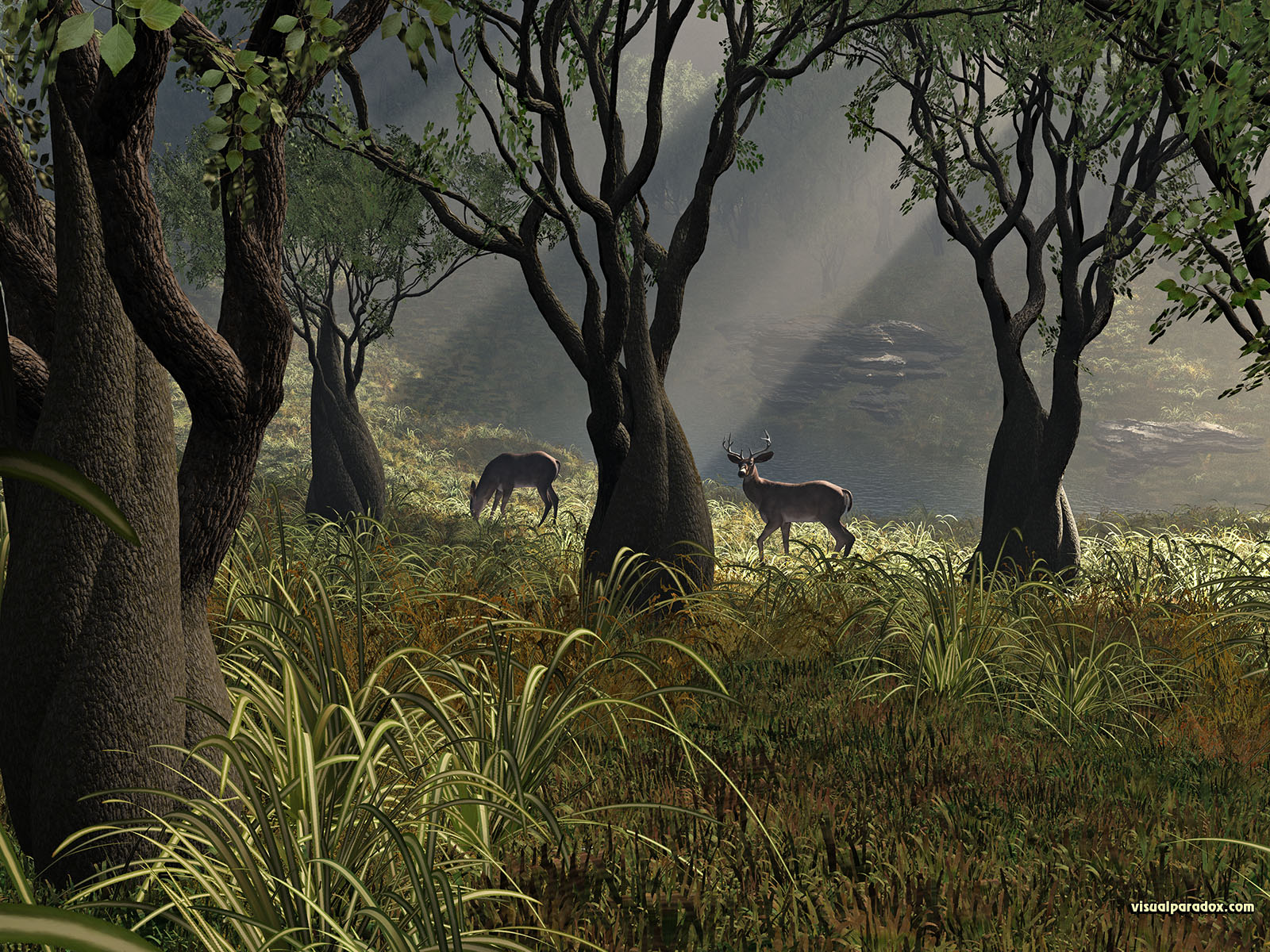 deer, crooked, forest, woods, glen, sun, rays, grass, trees, lake, buck, doe, 3d, wallpaper