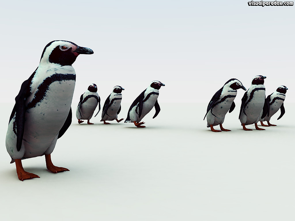 penguin. south, african, pengy, pole, cold, snow, emperor, flightless, birds, penguins, 3d, wallpaper