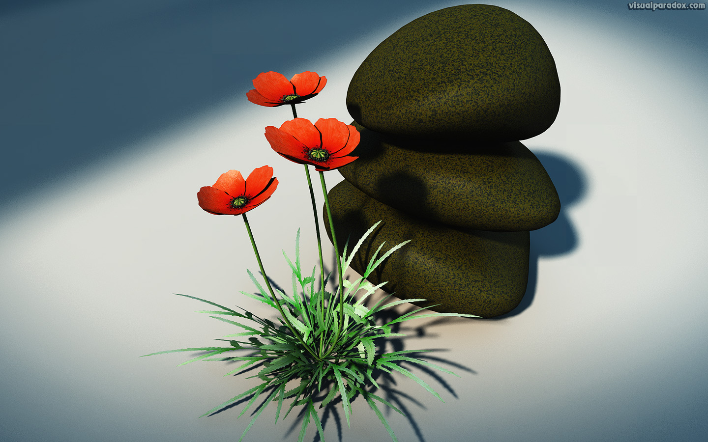 poppy, papaver, orientale, rhoeas, bloom, blossom, decorative, design, rocks, flora, floral, flower, nature, petal, plant, still life, poppy, red, rural, wild, wildflower, 3d, wallpaper
