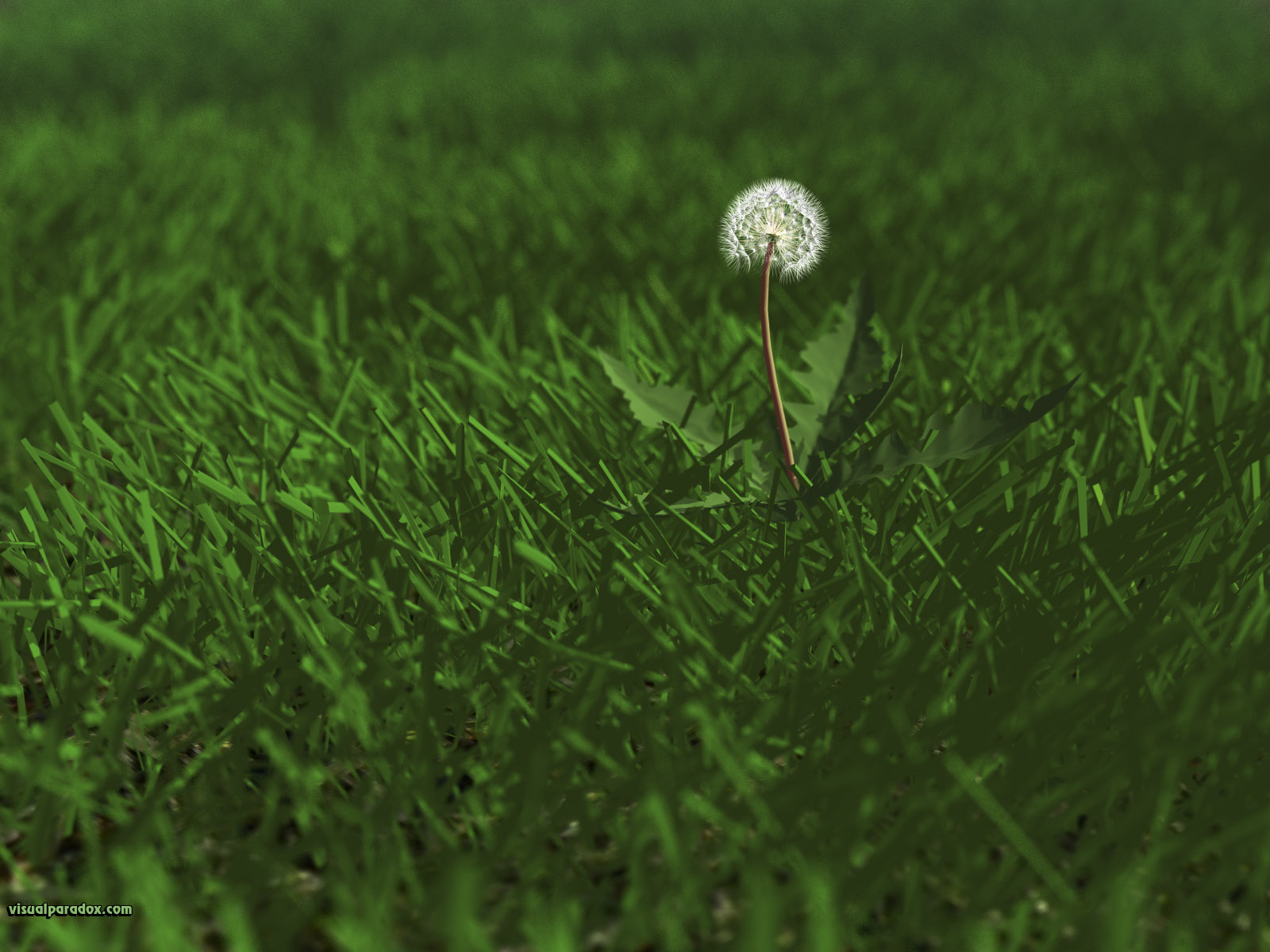 weed, flower, grass, lawn, yard, dandylion, seeds, plants, green, 3d, wallpaper