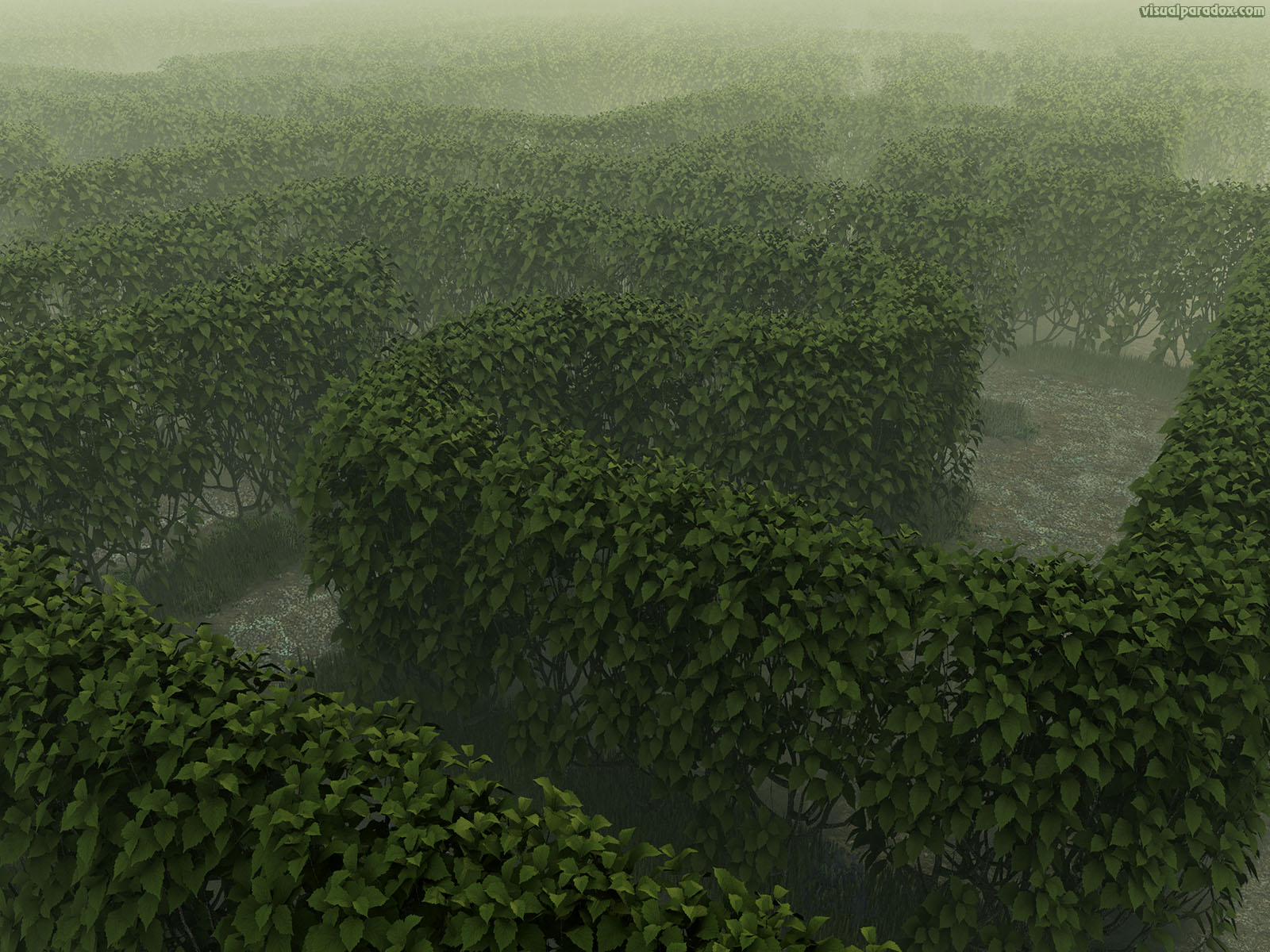 garden, path, labyrinth, deadend, lost, haze, fog, bush, shrub, solve, 3d, wallpaper
