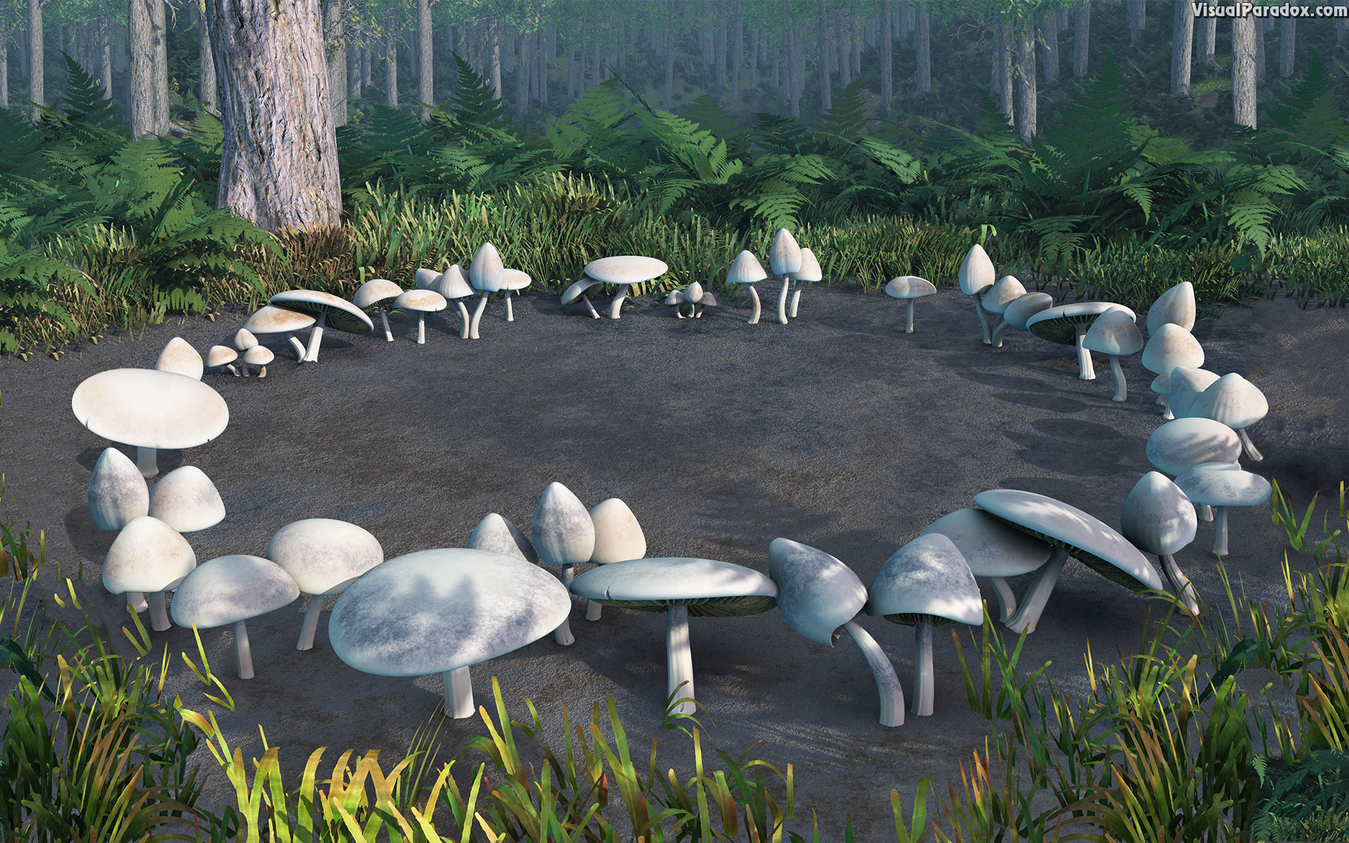 mushrooms, toadstools, circle, forest, woods, fungus, patch, glen, mushroom, toadstool, circles, 3d, wallpaper