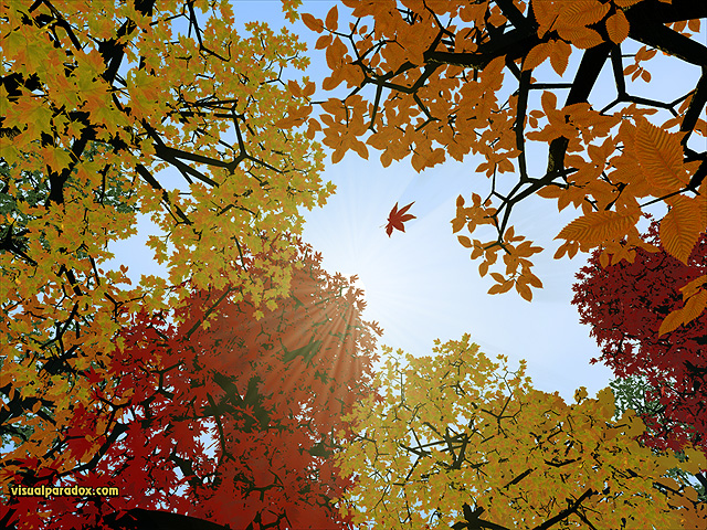 leaves, leaf, colors, fall, orange, red, yellow, sky, trees, forest, turning, change, drop, tree, free, 3d, wallpaper