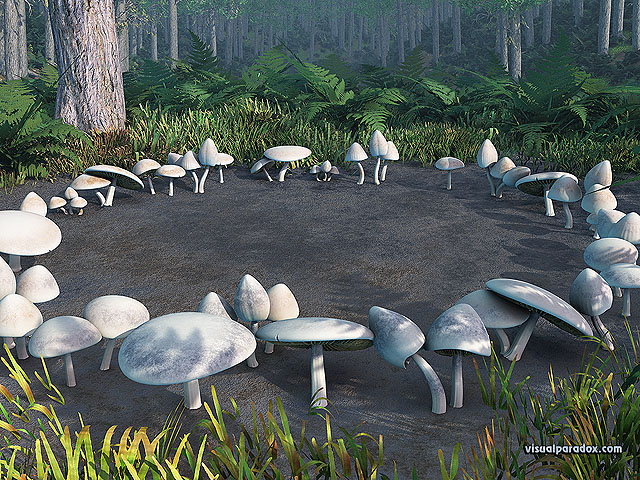 mushrooms, toadstools, circle, forest, woods, fungus, patch, glen, mushroom, toadstool, circles, free, 3d, wallpaper