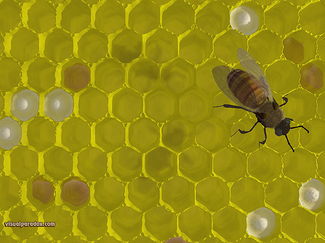 bee, hive, nest, sting, honey, wax, bees, 3d, wallpaper, free, free, 3d, wallpaper