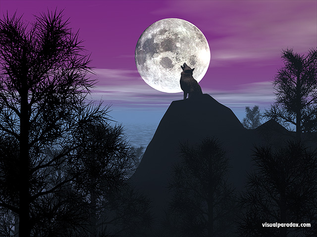 timber, wolf, howling, baying, moon, lunar, purple, pines, forest, coyote, wolves, animal, animals, free, 3d, wallpaper