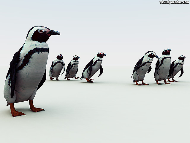 penguin. south, african, pengy, pole, cold, snow, emperor, flightless, birds, penguins, free, 3d, wallpaper