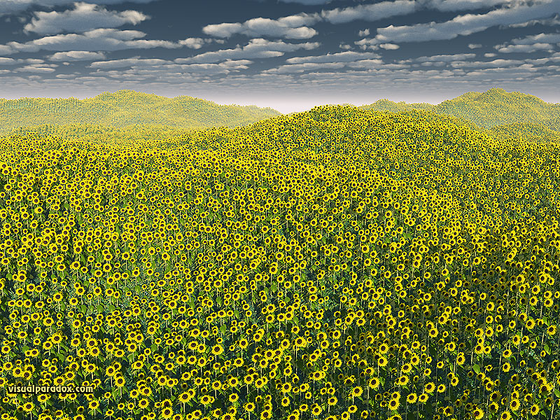 sunflowers, flowers, helianthus annuus, plants, field, clouds, flower, sunflower, 3d, wallpaper