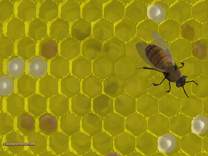bee, hive, nest, sting, honey, wax, bees, 3d, wallpaper, free, 3d, wallpaper