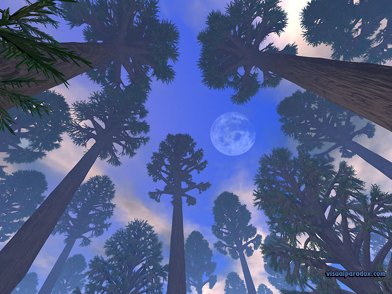 redwood, sequoia, forest, trees, moon, clouds, sky, woods, redwoods, 3d, wallpaper