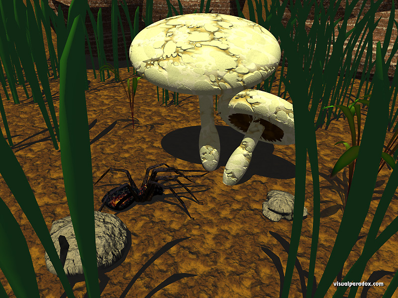 mushroom, grass, rocks, ground, hide, toadstools, spiders, insect, bug, bugs, 3d, wallpaper