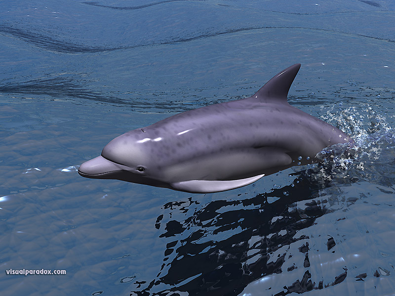 fast, dolphin, porpoise, swimming, water, ocean, sea, speed, swim, dolphins, animal, animals, 3d, wallpaper