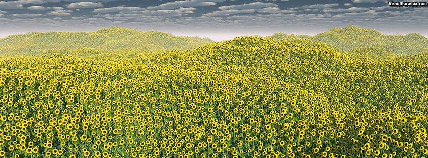 facebook, coverphoto, cover, sunflowers, flowers, helianthus annuus, plants, field, clouds, flower, sunflower, 3d