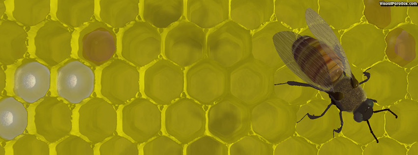 facebook, coverphoto, cover, bee, hive, nest, sting, honey, wax, bees, 3d, wallpaper, free, 3d