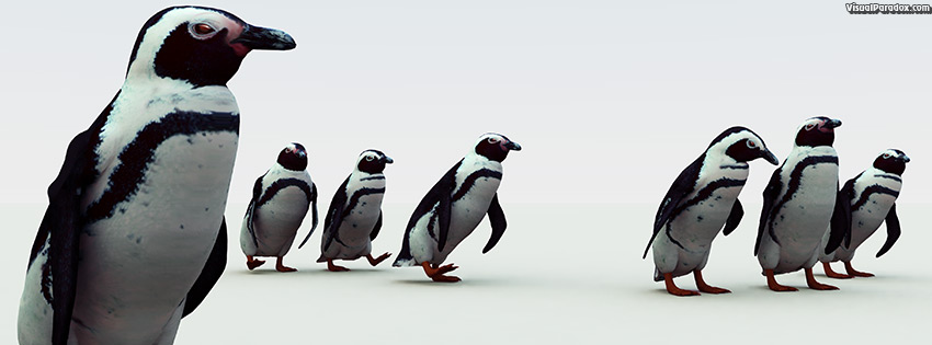 facebook, coverphoto, cover, penguin. south, african, pengy, pole, cold, snow, emperor, flightless, birds, penguins, 3d