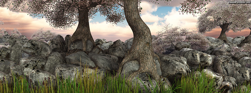 facebook, coverphoto, cover, trees, blossoms, flowers, reeds, lake, pond, river, rocks, roots, knarled, tree, root, 3d